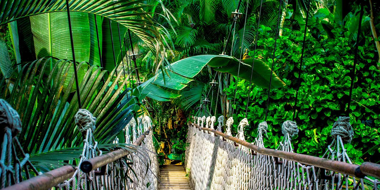 Parní kabina to je klima jako v tropickém pralese